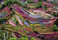Vẻ đẹp lộng lẫy của ruộng bậc thang Nguyên Dương