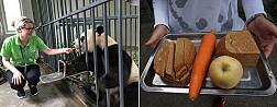Đô Giang Yến Panda Keeper chương trình Tour du lịch Trung Quốc