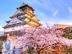 """Trung Quốc: """"Chạy xô"""" đi Du lịch Nhật Bản"""