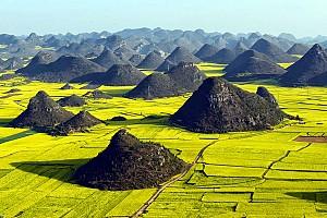 Những cánh đồng hoa cải vàng rộm đẹp nhất Trung Quốc