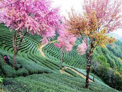 Những địa điểm ngắm trăm hoa khoe sắc khi đi du lịch Trung Quốc