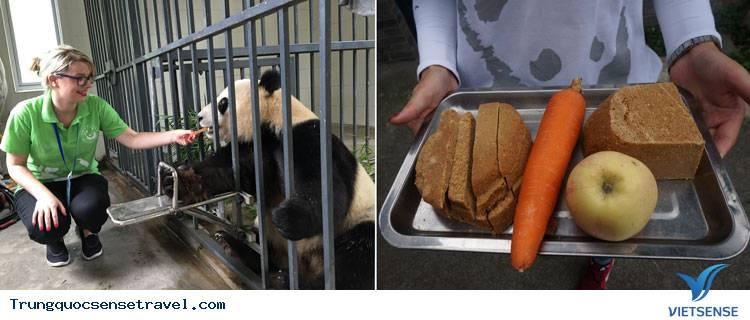 Đô Giang Yến Panda Keeper chương trình Tour du lịch Trung Quốc,do giang yen panda keeper chuong trinh tour du lich trung quoc