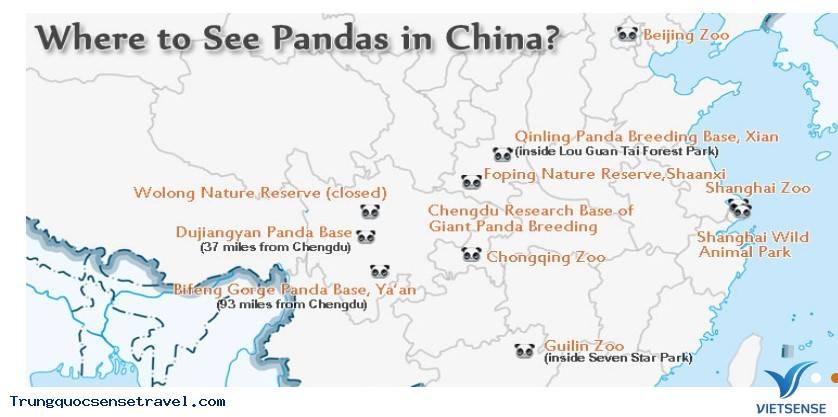 Khám phá Gấu Trúc ở Trung Quốc