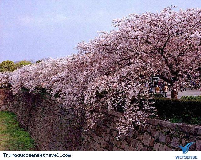 Trường Đại học nhiều hoa nhất tại Trung Quốc.,truong dai hoc nhieu hoa nhat tai trung quoc